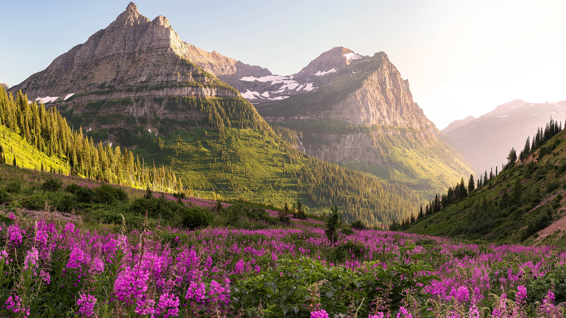 Beautiful Montana meadow and mountains